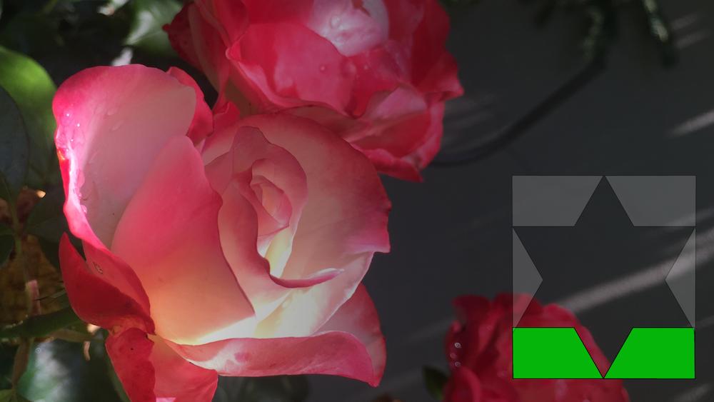Musik für Rose Ausländer